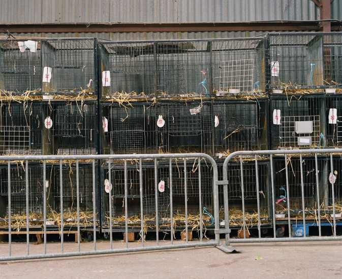 Cages empty, bird sales banned during the bird flu scare